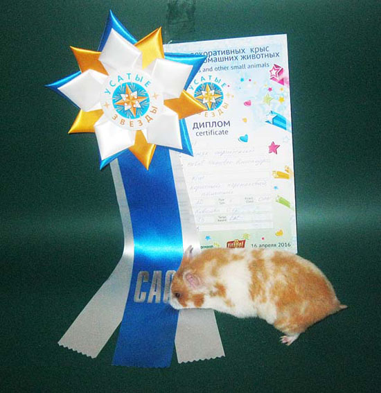 Metal Hamster Kasandra