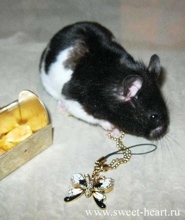 Metal Hamsters Wanda