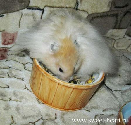 Metal Hamster Odin