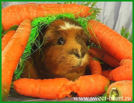 Морковная норка
